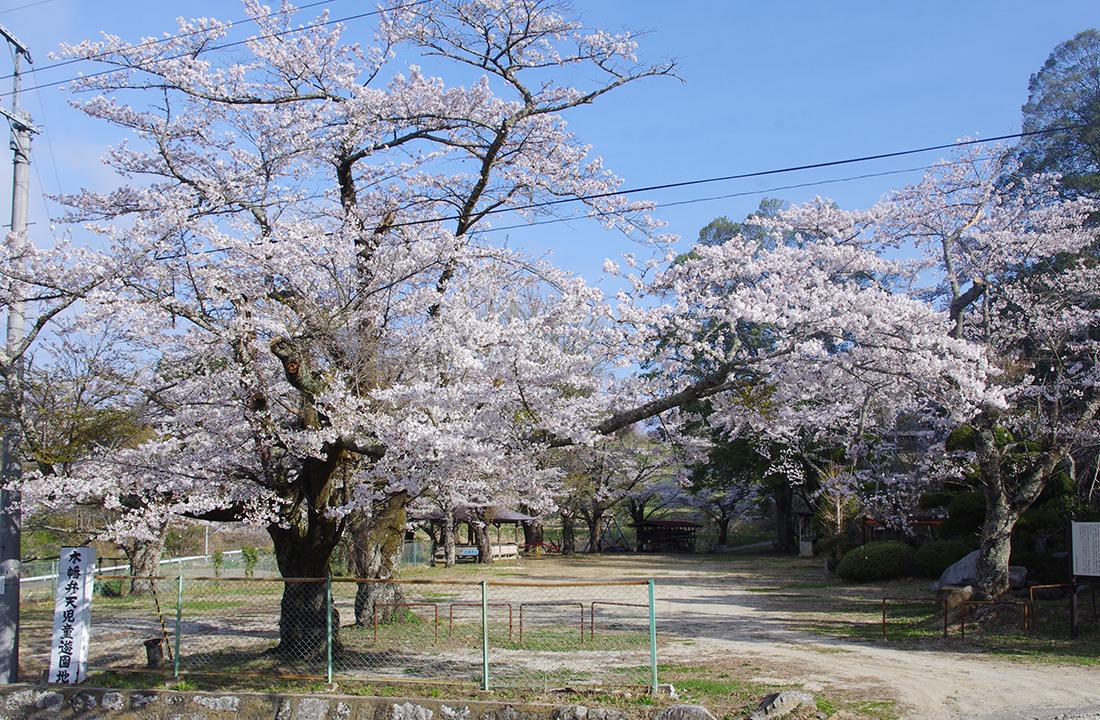 木幡山隠津島神社の桜